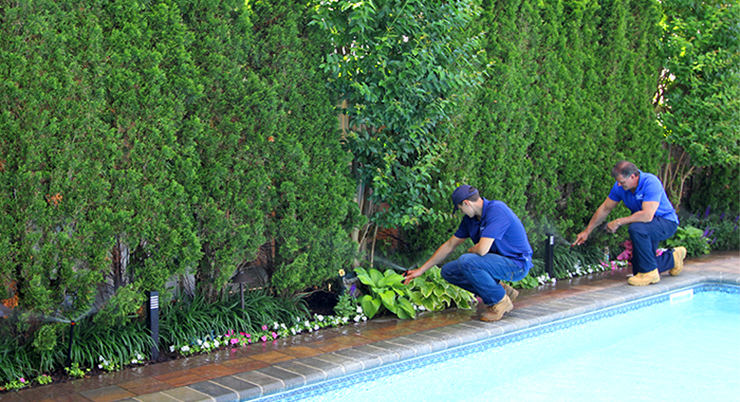 Local lawn sprinkler repair and renovation company